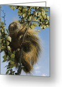 Dick Greeting Cards - Untitled Greeting Card by Christopher Knight