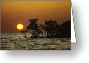 Everglades Greeting Cards - Untitled Greeting Card by James P. Blair