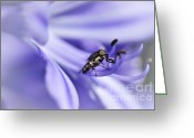 Antenna Greeting Cards - Unusual Fly on Agapantha Stamen Greeting Card by Kaye Menner