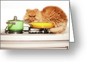 Pan Greeting Cards - Unwanted Cat Behaviour Greeting Card by Hulya Ozkok