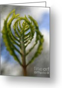 Natures Photos Greeting Cards - Unwrapped Greeting Card by Neal  Eslinger