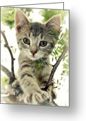 Playful Kitten Greeting Cards - Up a Tree Greeting Card by Amy Schauland