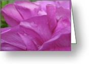 Purple Garden Greeting Cards - Up Close Greeting Card by Rona Black