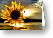 Digital Flower Greeting Cards - Up Lit Greeting Card by Karen M Scovill
