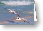 Tern Greeting Cards - Up- Little Ones  Greeting Card by E Luiza Picciano