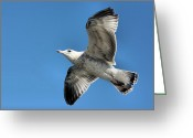 Tail Feathers Greeting Cards - Up Up and Away Greeting Card by Kristin Elmquist