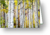 Aspen Trees Greeting Cards - Uphill Greeting Card by The Forests Edge Photography - Diane Sandoval