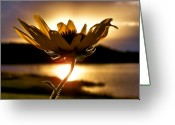 Flower Greeting Cards - Uplifting Greeting Card by Karen M Scovill