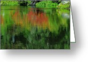 Foilage Greeting Cards - Upon Reflection Greeting Card by Teri Schuster