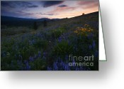 Balsamroot Greeting Cards - Upper Wenas Sunset Greeting Card by Mike  Dawson
