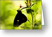Beauty Mark Greeting Cards - Upside Down Greeting Card by Leslie Leda