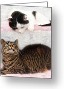 Black And White Cat Greeting Cards - Upstairs Downstairs With Emmy And Pepper Greeting Card by Andee Photography