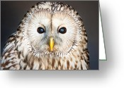 Pet Picture Greeting Cards - Ural owl Greeting Card by Tom Gowanlock