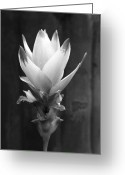Gray-scale Greeting Cards - Urban Beauty in Bloom Greeting Card by Michelle Wiarda