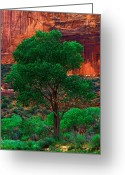 Zion National Park Greeting Cards - Utah - Cottonwood Greeting Card by Terry Elniski