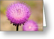 Imported Greeting Cards - Utah Thistle Flower Greeting Card by Gary Whitton