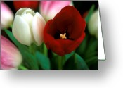 Flowers Photographs Greeting Cards - Valentine Tulips Greeting Card by Kathy Yates