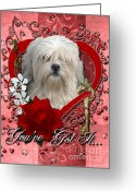 Holiday Greeting Cards - Valentines - Key to My Heart Lowchen Greeting Card by Renae Frankz
