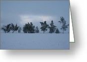 Winter Trees Greeting Cards - Valley Sentinels Greeting Card by Holly Ethan