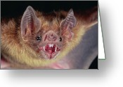 Bat Greeting Cards - Vampire Bat Desmodus Rotundus Portrait Greeting Card by Michael & Patricia Fogden