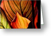 Leaves Photographs Greeting Cards - Variegated Leaves Greeting Card by Tam Graff