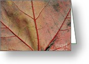 Tree Limbs Greeting Cards - Vascular Greeting Card by Luke Moore