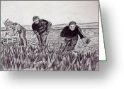 Workers Drawings Greeting Cards - Veg Pickers Kent Greeting Card by Peter Edward Green