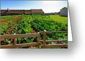 Fence Row Greeting Cards - Vegetable farm Greeting Card by Carlos Caetano
