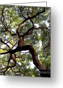 Live Oak Trees Greeting Cards - Veins of Life Greeting Card by Karen Wiles