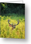 Horns Greeting Cards - Velvet Emerging Greeting Card by Emily Stauring