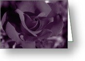 Red Photographs Greeting Cards - Velvet Rose Greeting Card by Aidan Moran