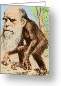 Theory Of Evolution Greeting Cards - Venerable Oran-outang, Contribution Greeting Card by Science Source