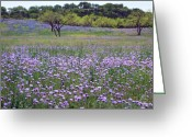 Blue Bonnets Greeting Cards - Verbena and Blue Bonnet Landscape Greeting Card by Linda Phelps