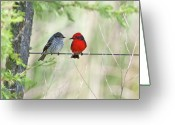 Two By Two Greeting Cards - Vermilion Flycatcher In Love Greeting Card by Edith Polverini