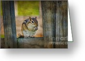 Chipmunk Greeting Cards - Vermont Chippy Greeting Card by Deborah Benoit