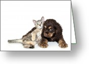 Animal Themes Greeting Cards - Very Sweet Kitten Lying On Puppy Greeting Card by StockImage
