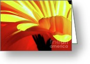 Abstract Flowers Greeting Cards - Vibrance  Greeting Card by Karen Wiles