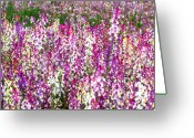 Pink And Purple Greeting Cards - Vibrant Field of Flowers Greeting Card by Carol Groenen