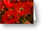 Pancho Greeting Cards - Vibrantly Red Greeting Card by Vicki Pelham
