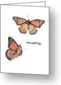 Insect Drawings Greeting Cards - Viceroy Butterfly Greeting Card by Betsy Gray