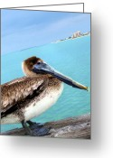 Surf Fishing Photo Greeting Cards - View From Pier 60 Pelican Greeting Card by Angela Rath