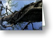 Figs Greeting Cards - View Looking Up A Tree Being Overtaken Greeting Card by Stacy Gold