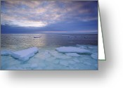Ice Floes Greeting Cards - View Of Freshly Frozen Hudson Bay Greeting Card by Norbert Rosing
