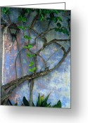 Walls Framed Prints Prints Greeting Cards - Vine and Wall Greeting Card by Kathy Yates