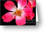 Reception Room Greeting Cards - Vine Rose Greeting Card by Cheryl Young