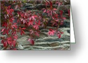 Red Leaves Greeting Cards - Vine With Red Leaves Clings To A Stone Greeting Card by O. Louis Mazzatenta
