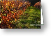 Autumn In The Country Photo Greeting Cards - Vineyard 13 Greeting Card by Xueling Zou