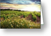 Sunlight Greeting Cards - Vineyard Greeting Card by Carlos Caetano