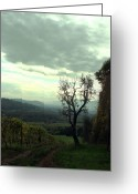 Prendergast Greeting Cards - Vineyard in Tuscany Greeting Card by Tom Prendergast
