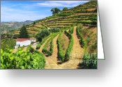 Grapevine  Greeting Cards - Vineyard Landscape Greeting Card by Carlos Caetano